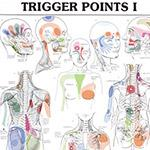 Acupuncture Books - Acupuncture Charts - Trigger Point Chart