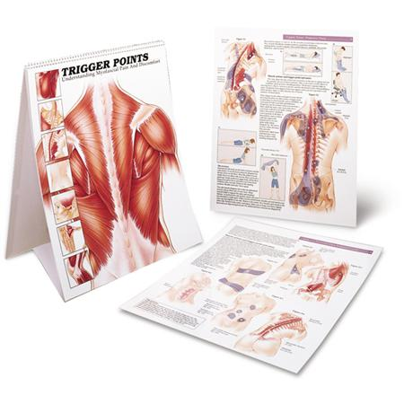 Trigger Points Charts