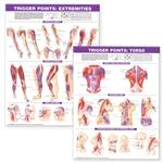 Laminated Trigger Points, Torso And Extremities