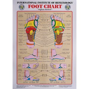 Int. Institute Of Reflexology Foot Chart 23 X 30