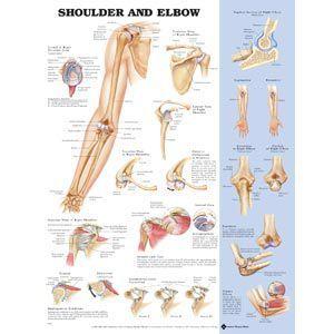 Shoulder/Elbow Poster 20