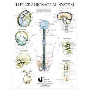 Craniosacral System Poster 19