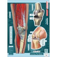 "BodyPartChart™ The Knee 17"" x 24"""