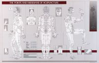 "Points & Meridians Of Acupuncture Chart 23"" X 36"""